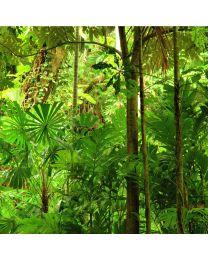 Esőerdő illat