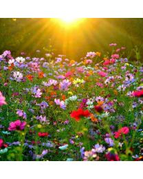 Virágoskert illat