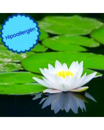 Vizililiom hipoallergén illat